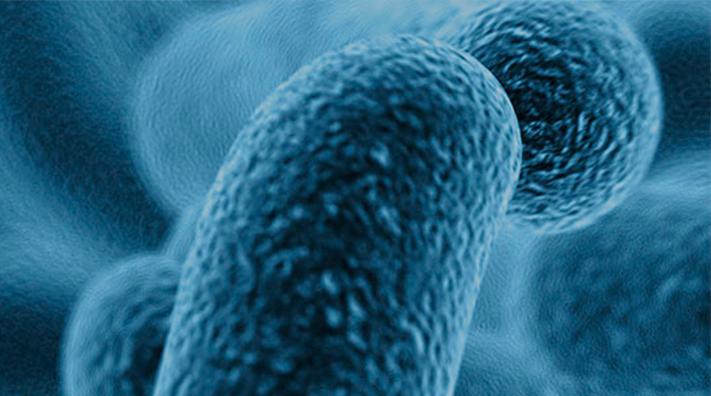Las bacterias intestinales están desequilibradas. ¿Quién las equilibrará?